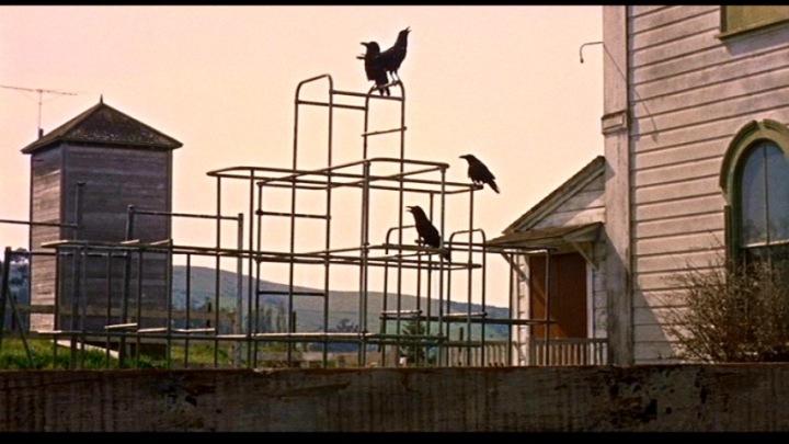 birds16